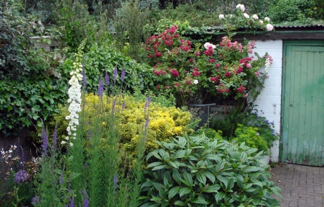 rs-2015-winner-floxglove-with-green-garden-shed-door-Marion-Palmer