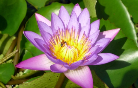 rs-groupA-highly-commended-lotus-flower