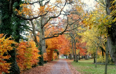 rs-groupB-commended-deer-park-mount-merrion-autumn-2014-Eithne-Byrne