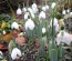 Protected: Snowdrops Day Trip – Wednesday 10th February 2016